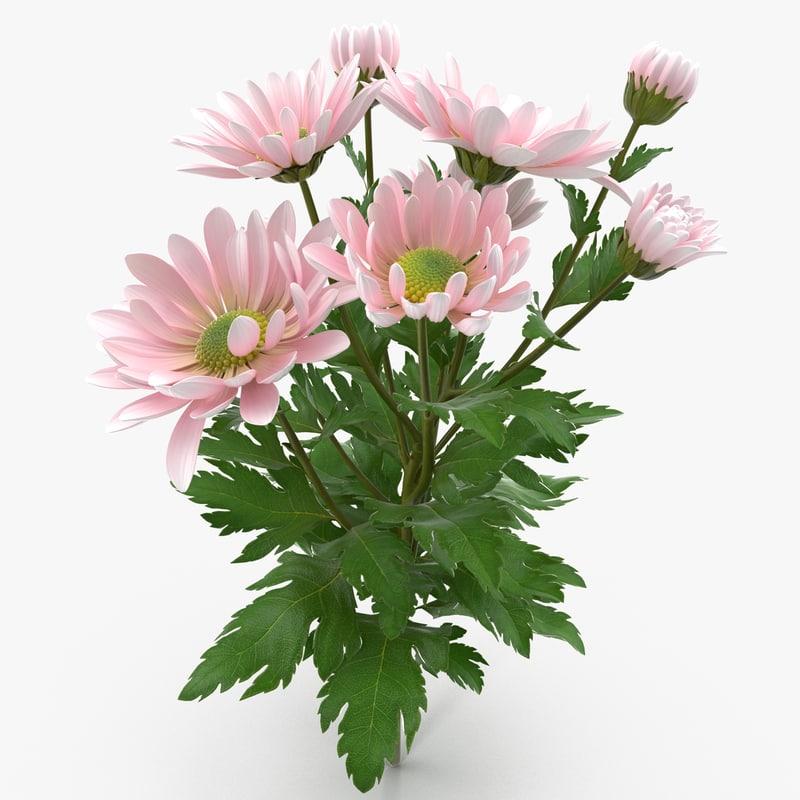 3d pink chrysanthemum model