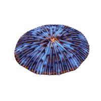 fungia plate coral 3d max