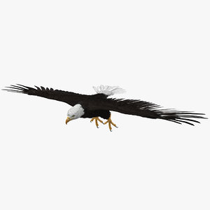 3d bald eagle t pose model