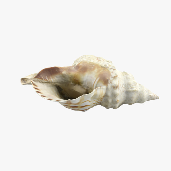 seashell animations 3d 3ds