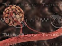 3d angiogenesis visulation tumor model