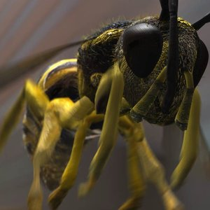wasp rigged 3d ma