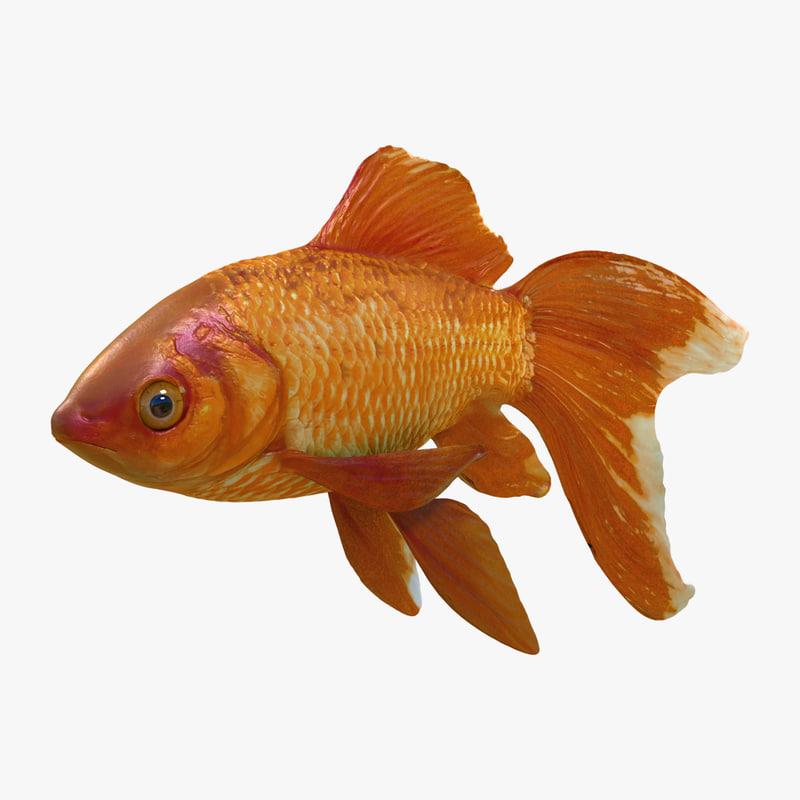 3d model of common goldfish