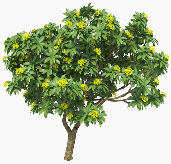 3ds max plumeria frangipani tropical trees