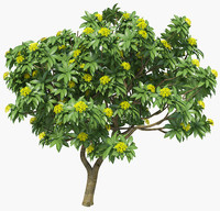 Plumeria Frangipani lush large type