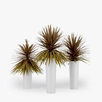 dracaena palm max