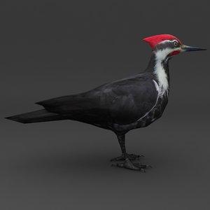 woodpecker black 3d model