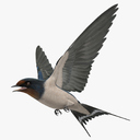 Swallow 3D models