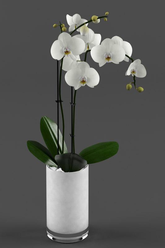 3d model white orchids glass pot