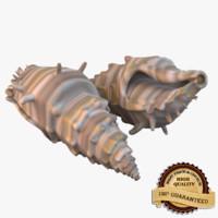 sea shell 3d ma