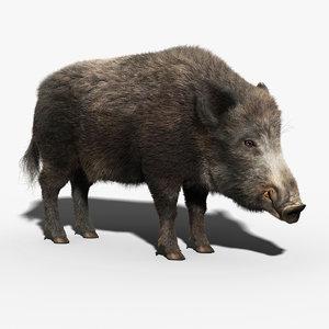 wild boar fur max