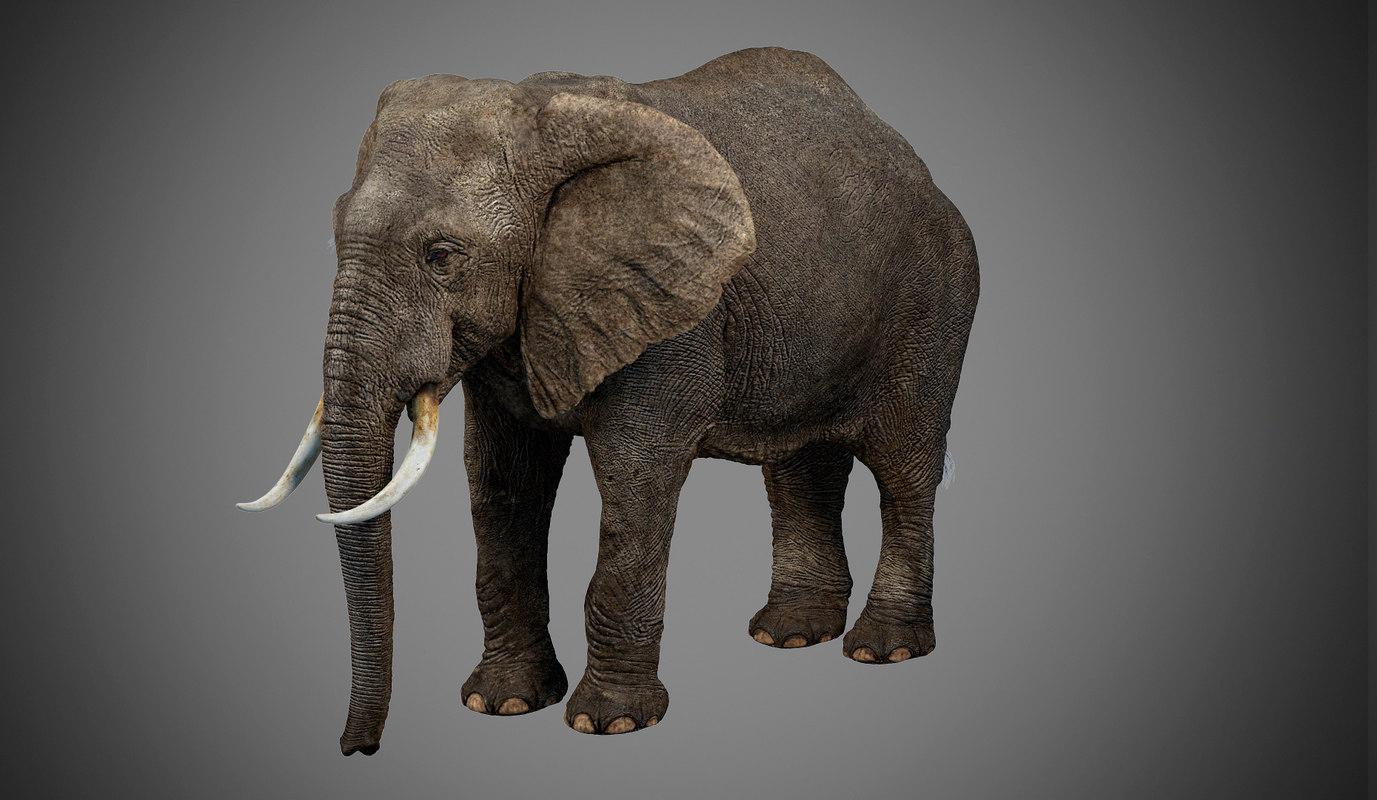 photorealistic elephant max