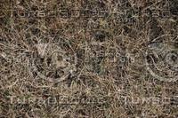 Grass_Texture_0009