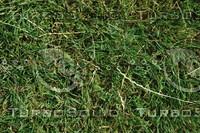 Grass_Texture_0012