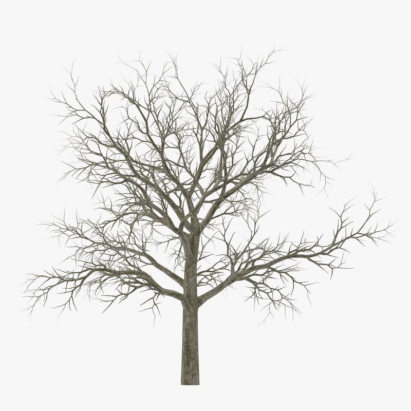 white oak tree winter 3d 3ds
