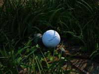 Grass, ball, stone