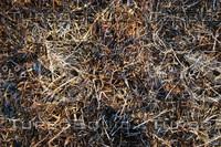 Grass_Texture_0013