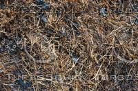 Grass_Texture_0014