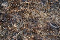 Grass_Texture_0017