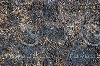 Grass_Texture_0015