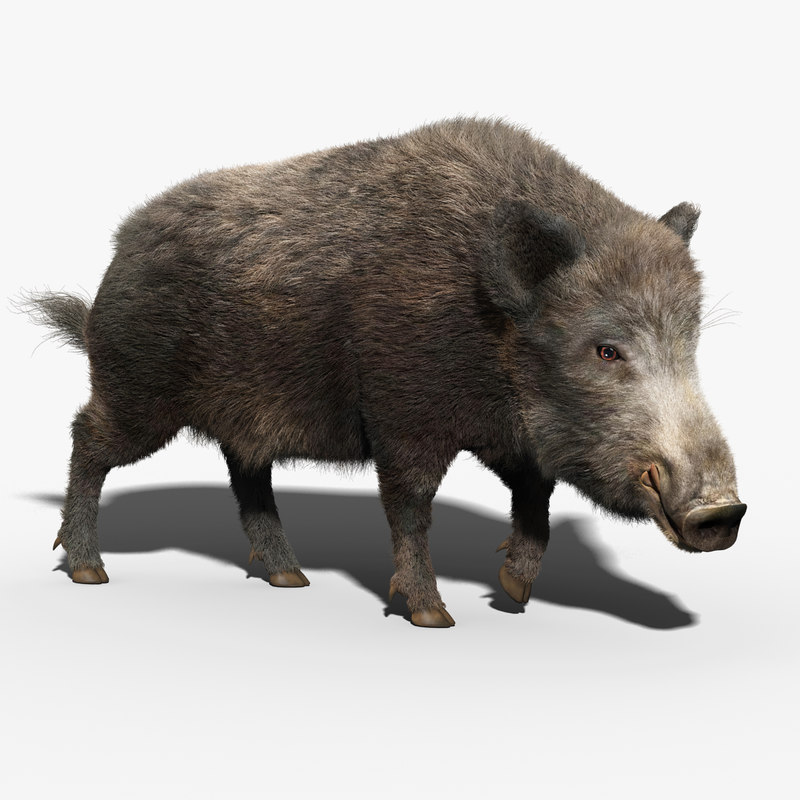 3d model wild boar fur rigged