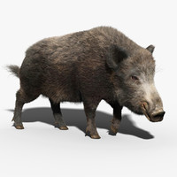 Wild Boar(FUR)(RIGGED)