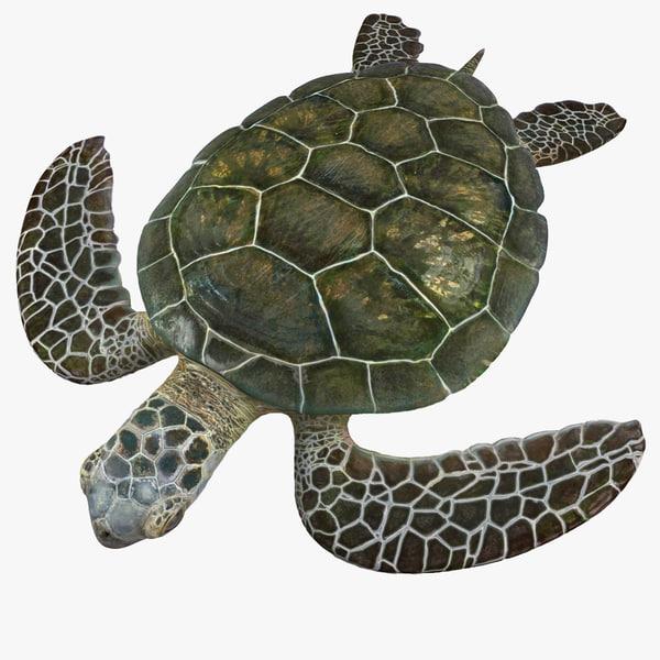 max green sea turtle