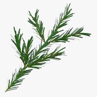 3d pine tree sprig
