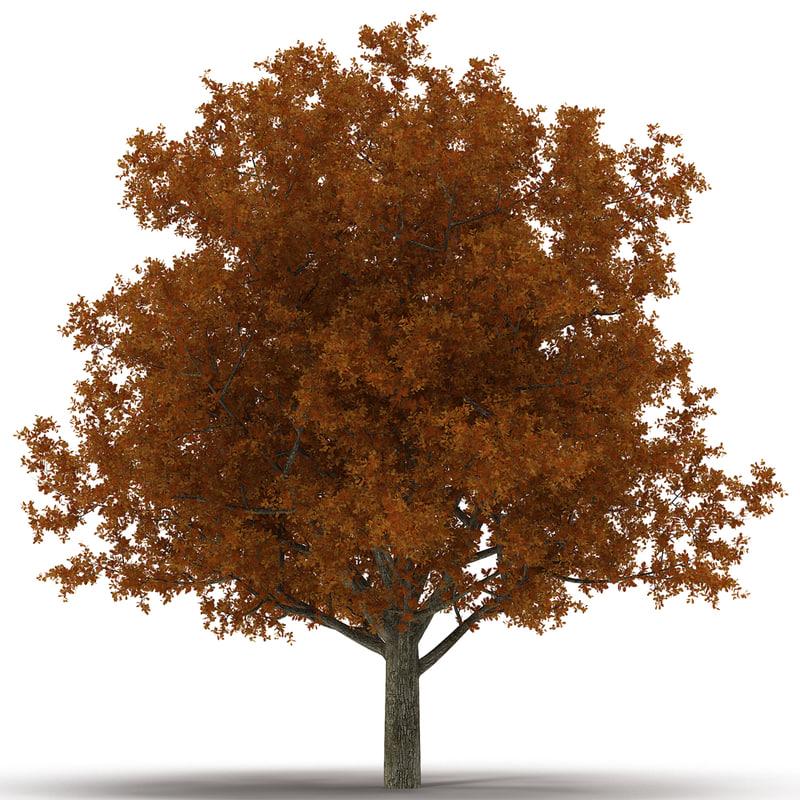 white oak tree autumn 3d model