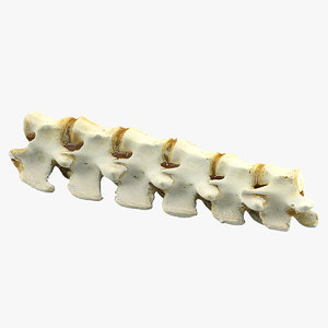 realistic animal spine 3ds