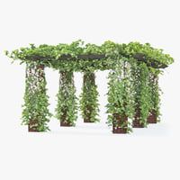 Climbing Roses Pergola With Flowers Ivy Long