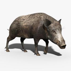 wild boar rigged 3d max
