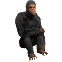 3d obj chimpanzee rigged fur