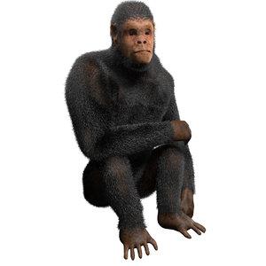 3d obj chimpanzee rigged fur
