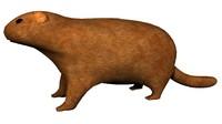 maya groundhog