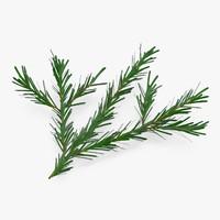 3d model pine tree sprig