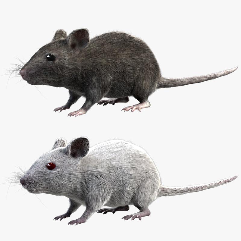 3d model grey house mouse fur