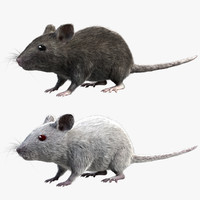 3d model grey house mouse fur
