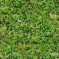 Rough grass 6