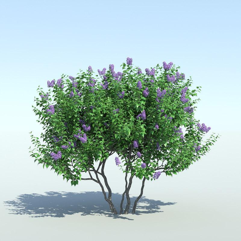 3d model lilac tree