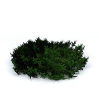 3d juniper model