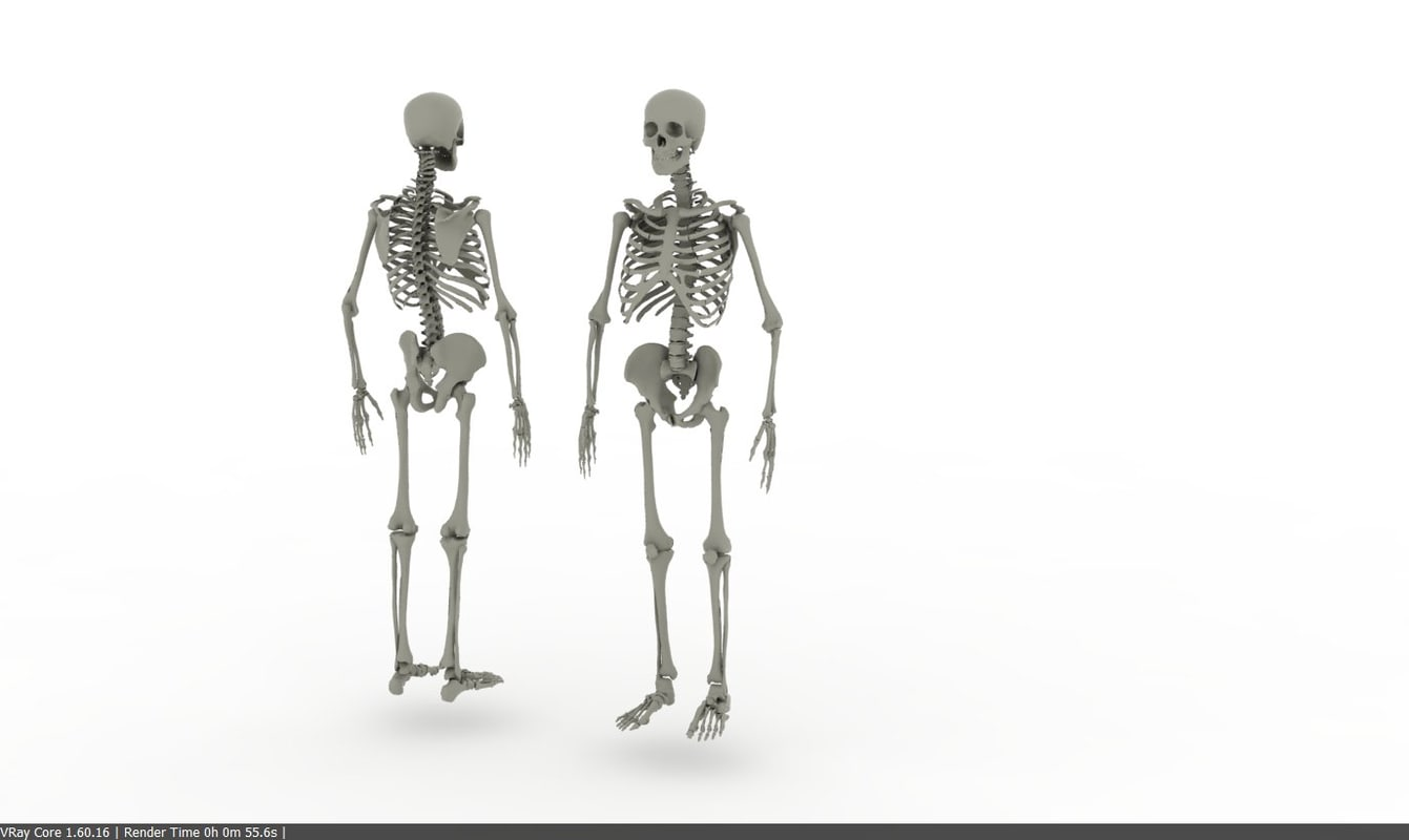 3ds human skeleton realistic