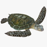 Sea Turtle Pose 3