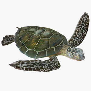 3d sea turtle pose 3