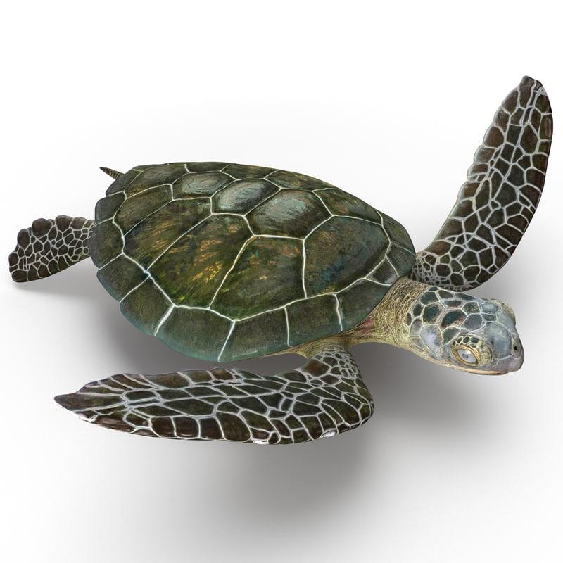 3d sea turtle pose 3