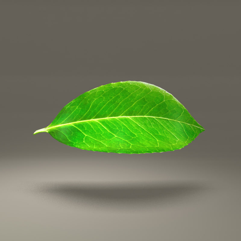 green leaf 3d obj