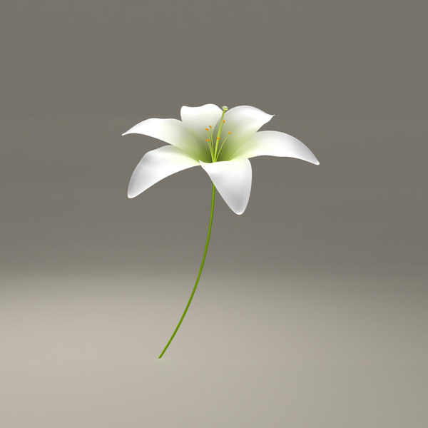 lilly blooming 3d obj