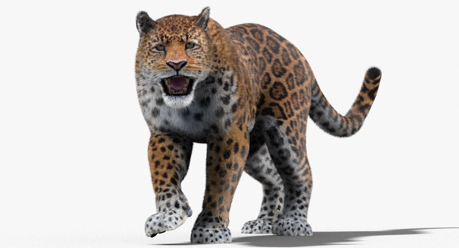 3d fur cat animation