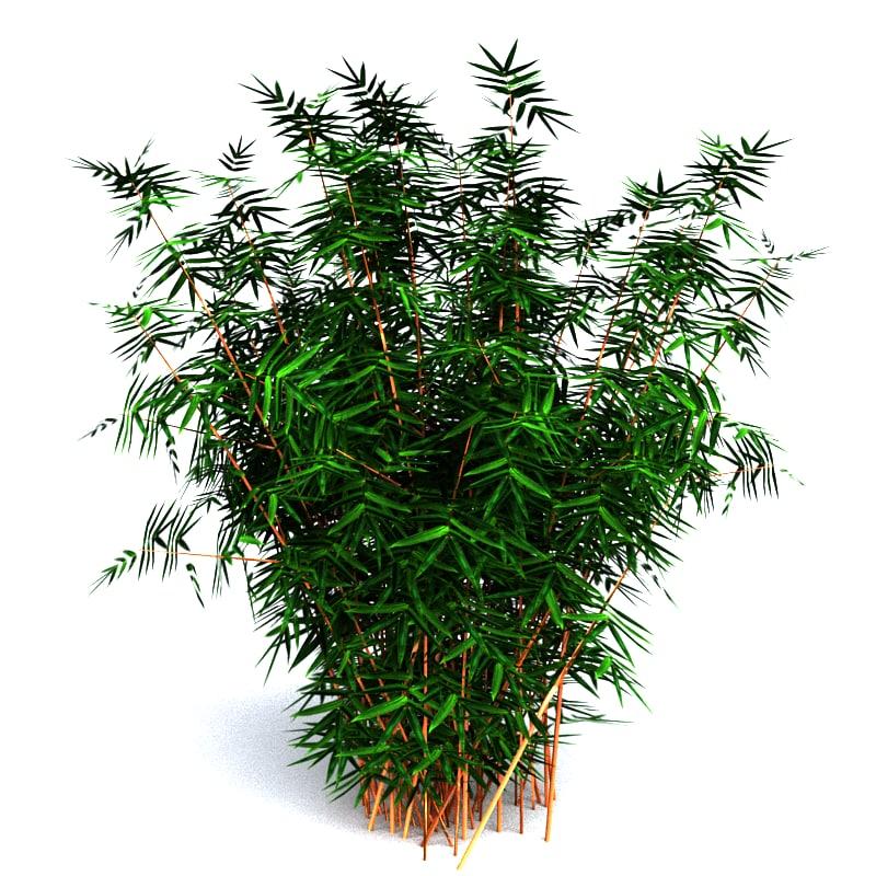 max bamboo