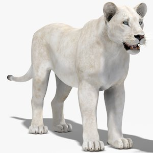 lioness white 3d max